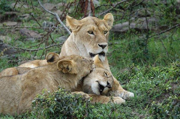 Pozorovanie dravcov je v Keni vyhľadávanou atrakciou.