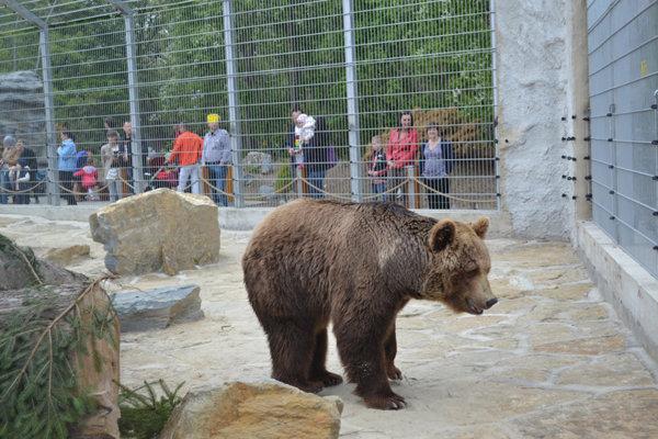 Medveď v spišskonovoveskej Zoo