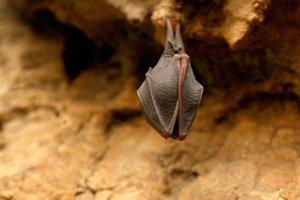 Jaskyňa je zimoviskom netopierov.