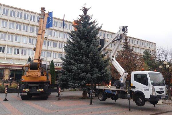 Vianočné stromčeky už osadili.