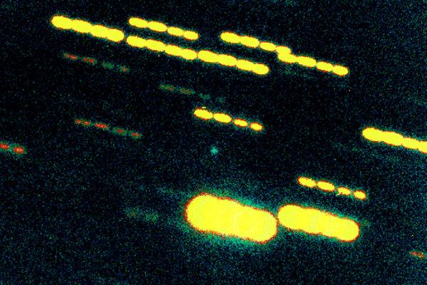 Drobné zelené svetlo v strede záberu je kométa 46P/Wirtanen v roku 2001. Teleskop bol nastavený tak, aby sledoval kométu, okolité hviezdy sú preto zobrazené ako svetelné stopy.