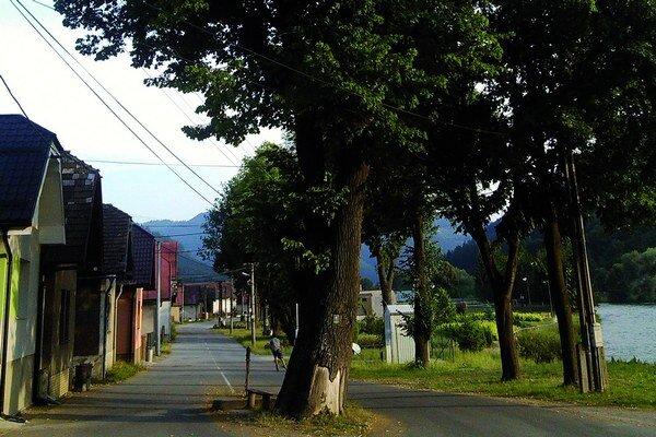 Chránená lipa má 123 rokov, rastie uprostred hlavnej cesty v dedine pri obecnom úrade.