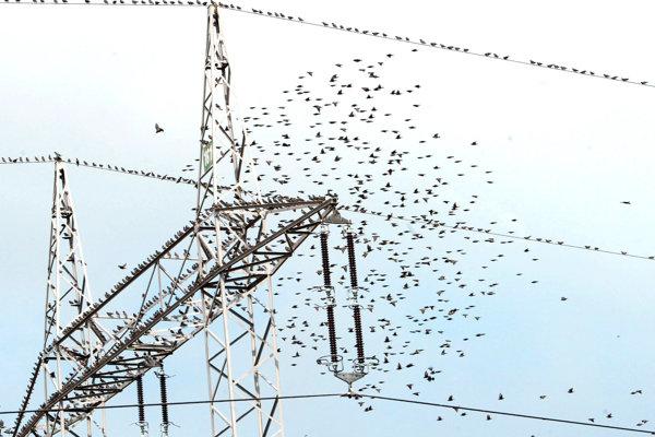 Vtáky na elektrickom vedení v Terchovej.