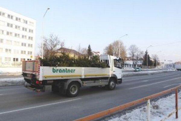 Vývoz stromčekov.