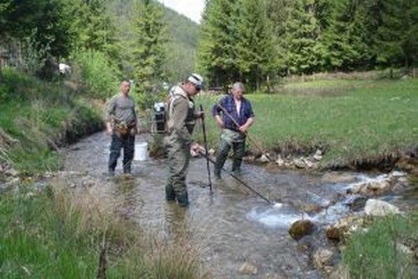 Lovná skupina premiestnila z Čutkovského potoka pstruhy, lipne a hlavátky do Váhu a Revúcej.
