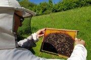 Jaroslav Setnický pri práci so včelami.