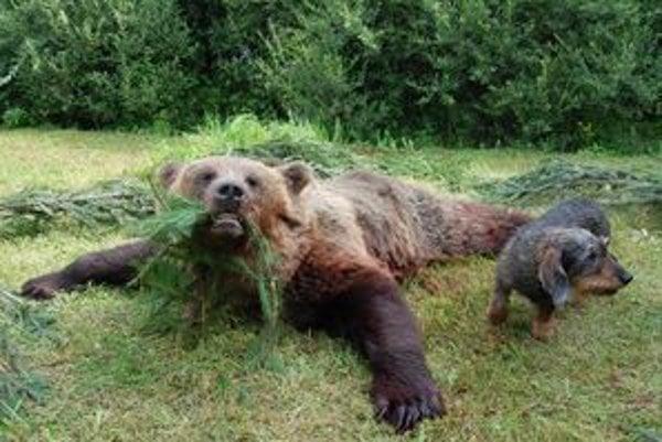 Trofej zastreleného medveďa zostane poľovníkovi Milanovi Staroňovi.