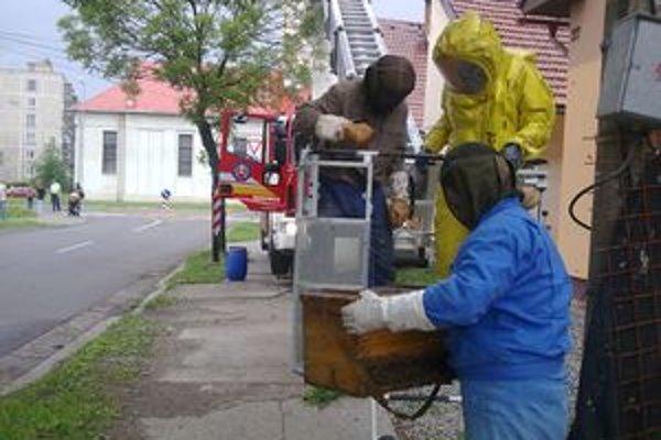 Včely dostali zo stromu dolu hasiči v spolupráci s včelármi.
