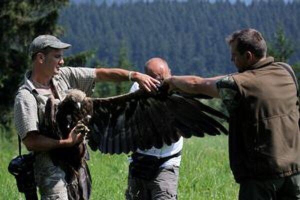Vtáky mali šťastie v nešťastí. Orlicu vypustili do voľnej prírody, bocian sa ešte zotavuje.