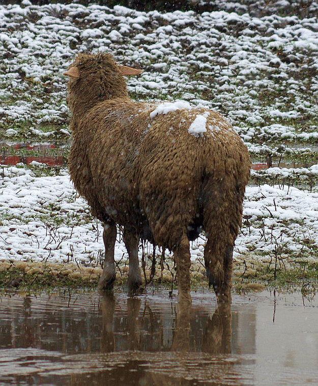 Tejto fešande snehová prikrývka veru nevadila