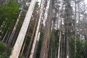 Takto vyzerajú lesy v Zákopčí.