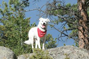 Doposiaľ mali psy do TANAP-u umožnený prístup pod podmienkou, že budú uviazané.