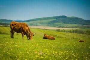 Vizitkou Agrodružstva Bánová je mäso a výrobky svetovej kvality