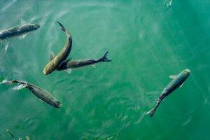 Hlienovitý povlak rýb chráni zvieratá pred nebezpečnými mikróbmi.