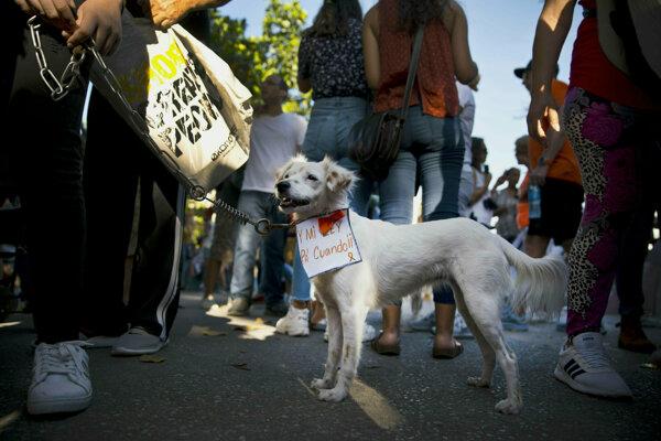 Kubánci protestovali za práva zvierat.