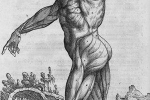 """Piata kniha opisovala tráviaci a pohlavný systém. V šiestej sa venoval srdcu """"a súvisiacim orgánom""""."""