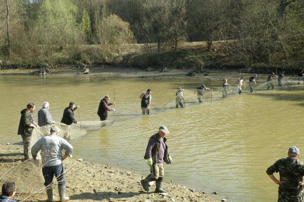 Prvou sieťou nahnali ryby do prednej časti rybníka. Túto sieť držali zapichnuté koly.