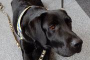 Psy sú klasifikované ako kompenzačná pomôcka, no bez kritérií a kontroly.