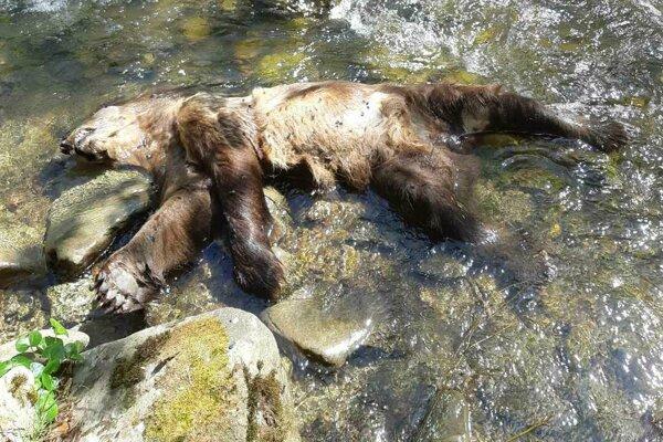 Príčinu uhynutia zvierať  zistí pitva.