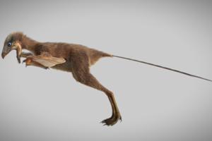 Krídla vznikli predĺžením ramennej a lakťovej kosti.