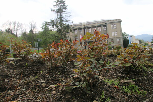 Ružomberok nesie vo svojom názve ružu. V parkoch a mestských záhonoch sú ruže vzácnosťou.