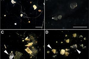 Mikroplasty, kúsky alobalu a skla z riek Labe (A), Mosela (B), Neckar (C) a Rýn (D). Biele prúžky predstavujú jeden milimeter.