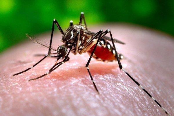 Mierne zimy znamenajú viac komárov.