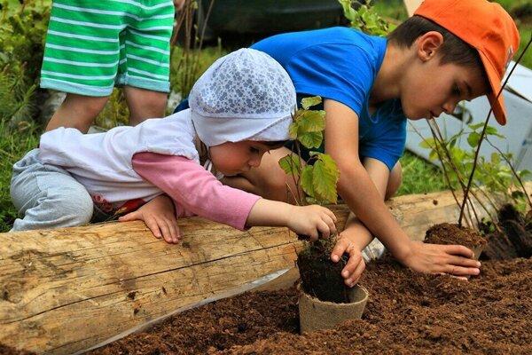 Lesníci pripravili sadenie