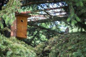 Areál čistiarne odpadových vôd sa stáva vtáčím rajom.