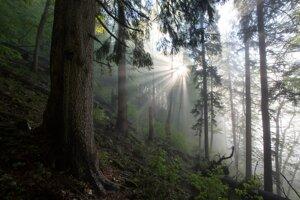 Do pralesa prichádza ráno (Veľká Fatra).