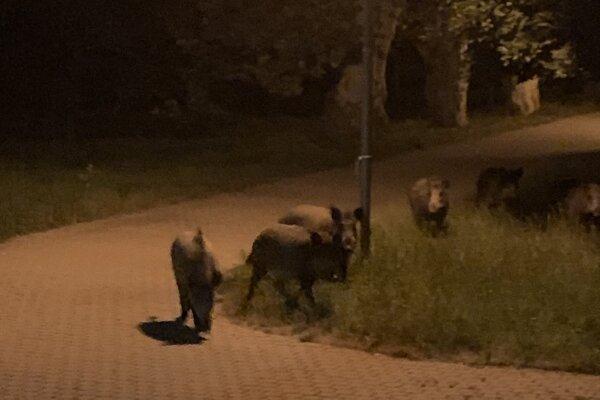 Návštevníci v parku.