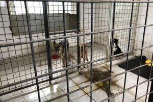 V čase kontroly sa nachádzali v troch kotercoch tri psy. Všetky boli umiestnené v jednom z nich, pričom nemali pripravené žiadne ležovisko.