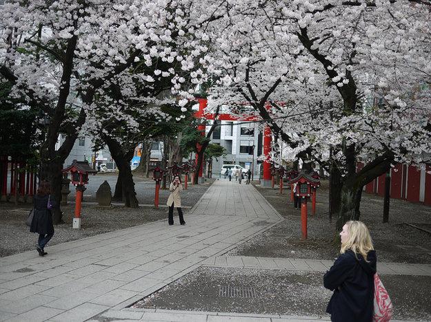 Symbolom Tokia sú v týchto dňoch kvitnúce sakury.