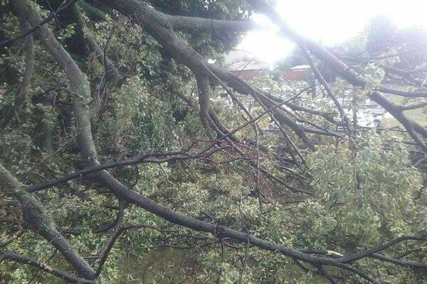 Počas búrky padali na viacerých miestach stromy.