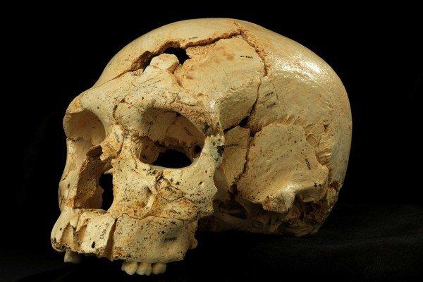 Dávne lebky protoneandertálcov ukázali, že veľké mozgy prišli až neskôr.