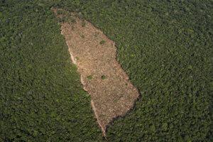 Odlesnený kus pôdy v strede džungle neďaleko Porto Velho v Brazílii.
