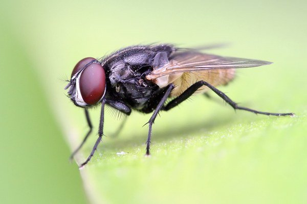 Čas plynie muchám pomalšie.