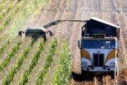 Môže byť upravená kukurica nebezpečná pre ľudí a zvieratá?