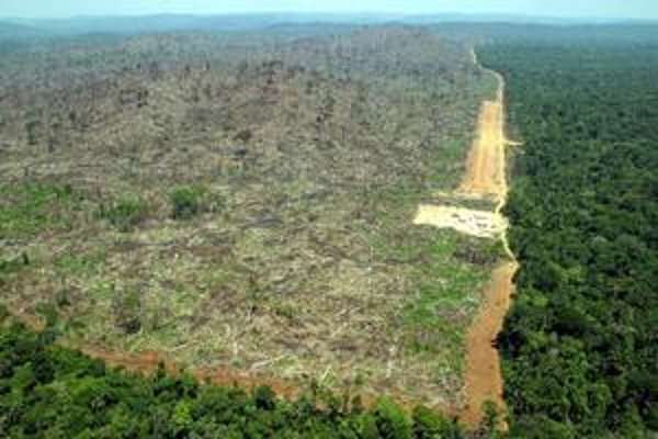 Ťažba dreva v minulých rokoch zasiahla aj brazílsky región Pará.