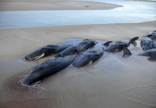 velryby-na-suchu2_sitaap.jpg