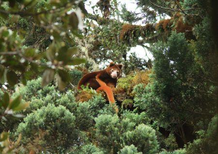 stromove_kengury4.jpg