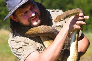 Chované hady sú zvyknuté na manipuláciu, ale aj tie môžu pohrýzť.