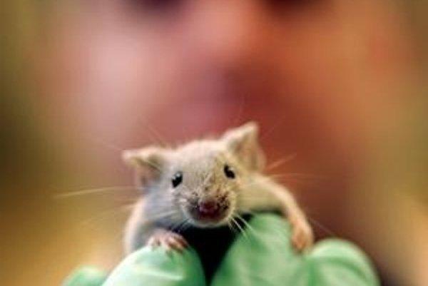 Stanú sa myši kľúčom k starnutiu?