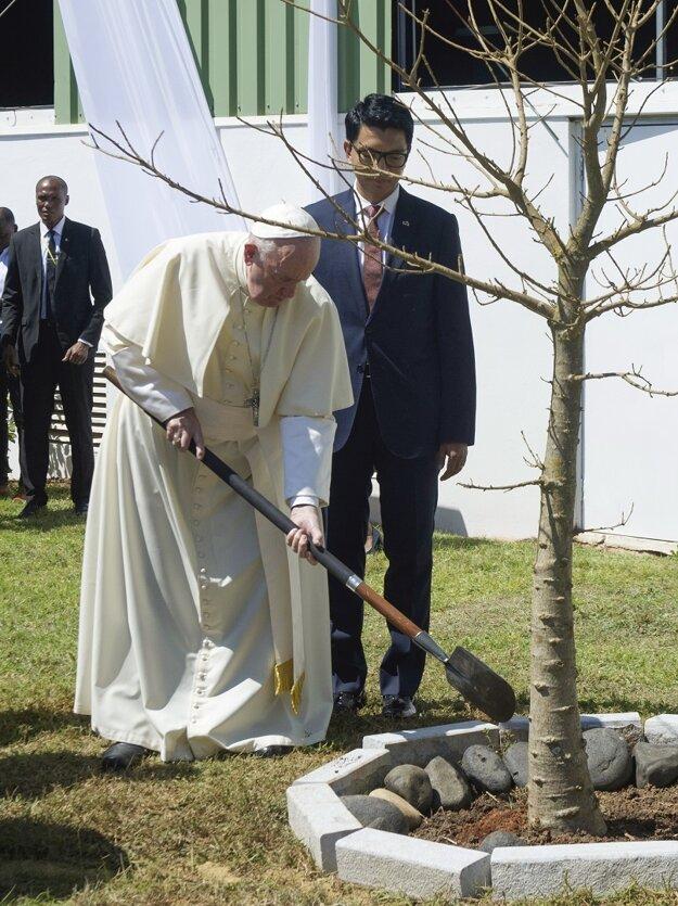 Pápež sadí baobab s prezidentom Madagaskaru.