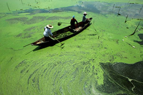 Ľudia bojujú o čistú vodu s premnoženými sinicami na jazere Tian-čch' v južnej Číne. Sinice sa množia aj preto, že do vodných zdrojov unikajú nevyužité živiny z umelých hnojív.
