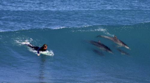 surfer-delfiny_tasrap.jpg