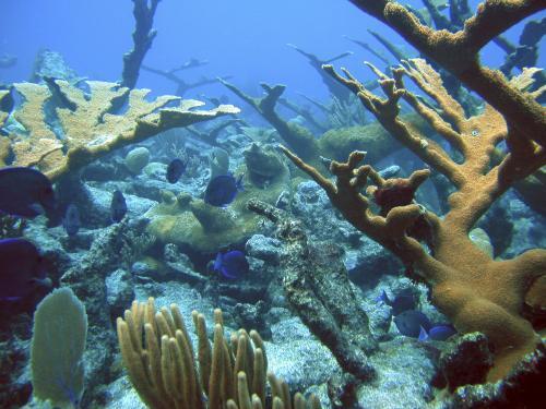 koralovy_utes_ap.jpg