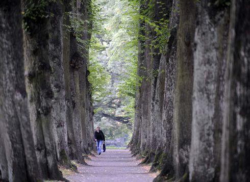 stromy_res.jpg