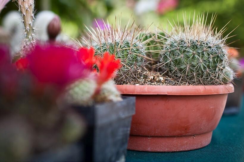 kaktus2-820.jpg