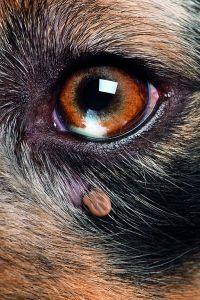 zvierata01.jpg